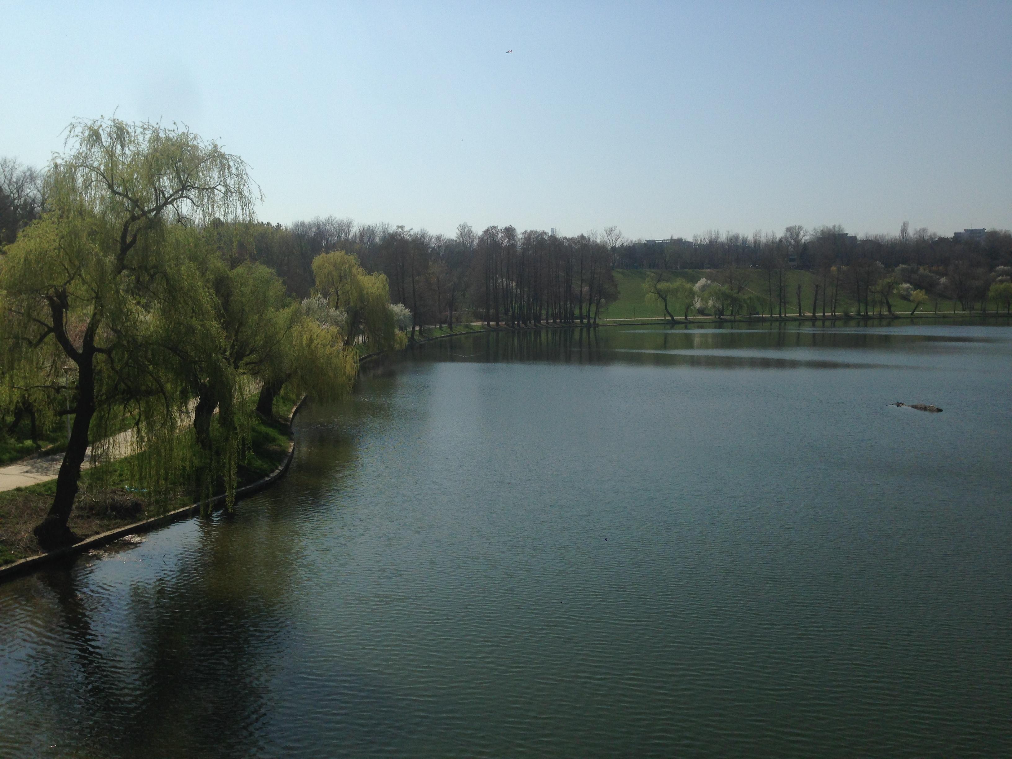 Lago con salici piangenti