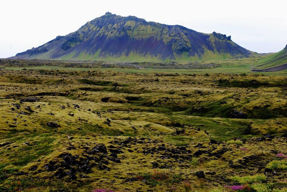 Campo di lava solidificata ricoperta di muschio in lontananza si vede un montagna