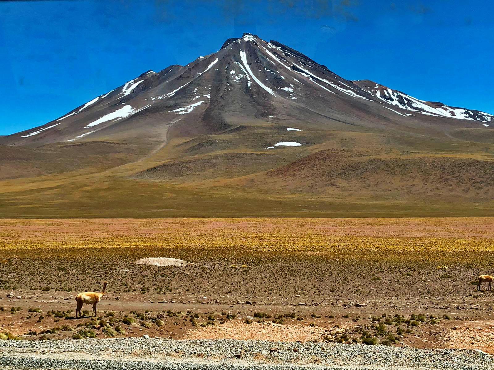 Vulcano e guanaco